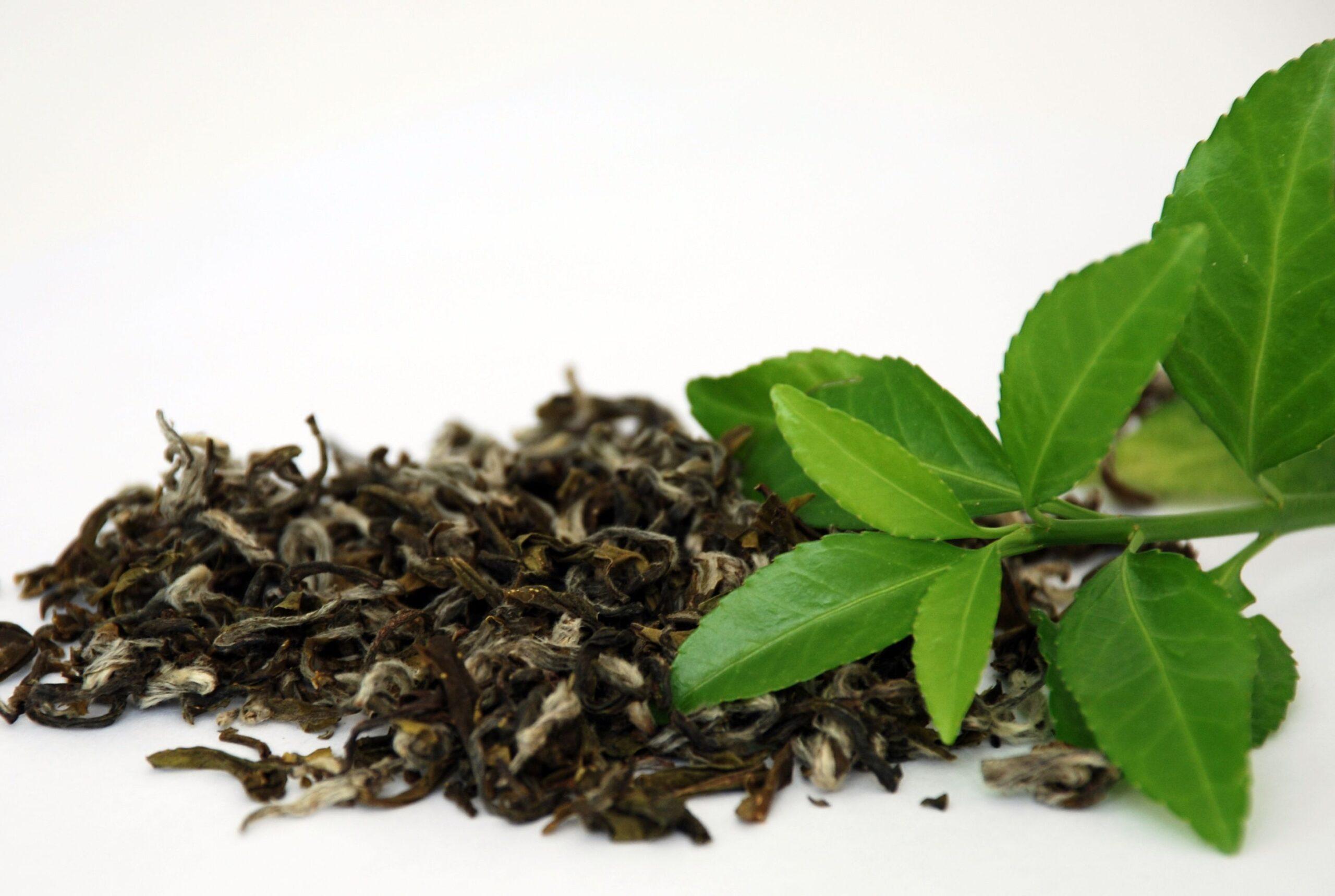 Zelený čaj - GymBeam